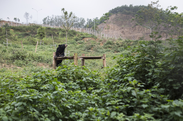 FOUR PAWS ends bile bear keeping in Ninh Binh province