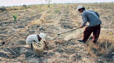 Binh Thuan loses fight against desertification in coastal area