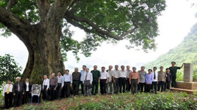 300 precious century-old trees honored, protected