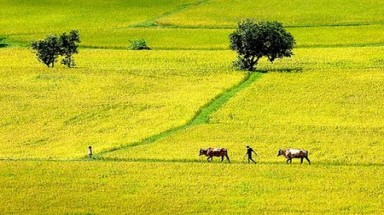 Resources from agricultural drained